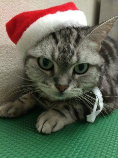 猫ちゃんシャンプー